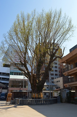櫛田神社 012