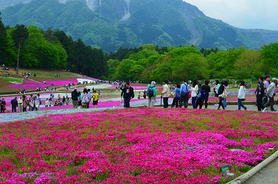 羊山の芝桜 006