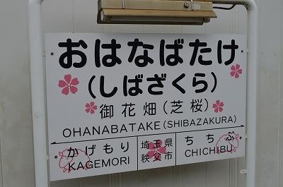 羊山の芝桜 001