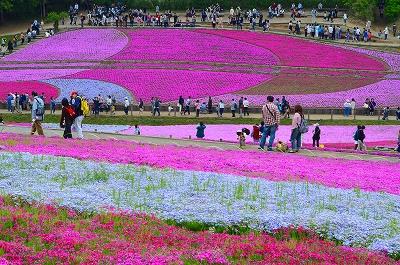 羊山の芝桜 004