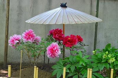上野東照宮ぼたん苑 005