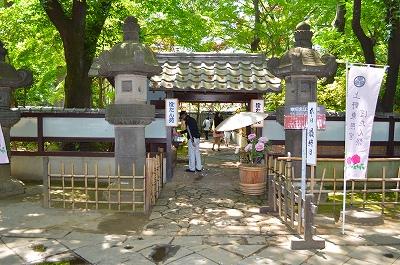 上野東照宮ぼたん苑 001