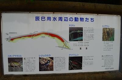辰巳用水 002