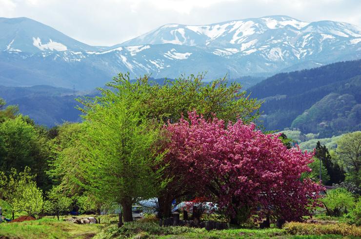 五月の吾妻山麓