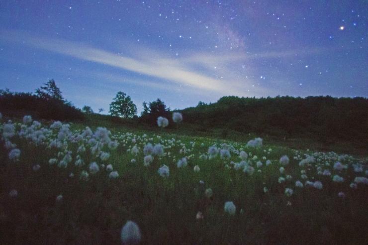 ワタスゲの夜