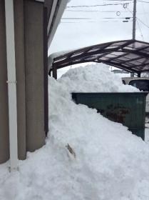 雪の置き場