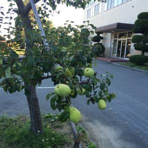 10月の花梨