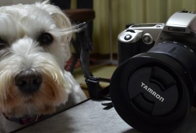 アナログカメラ-004