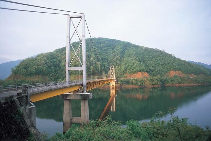 新緑の九頭竜湖夢の架け橋