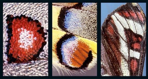 butterflyalphabet3.jpg