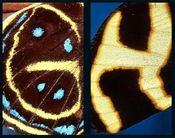 butterflyalphabet4.jpg