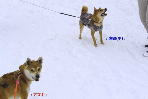 IMG_2334_AZUKII.jpg