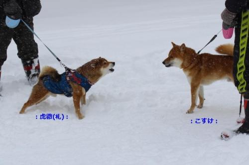 IMG_2364_AZUKI.jpg