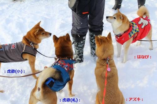 IMG_2396_AZUKI.jpg