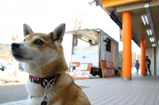 IMG_3503_AZUKI.jpg