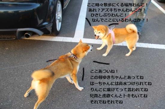 IMG_3537_AZUKI.jpg