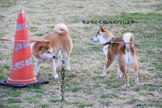 IMG_3561_AZUKI.jpg