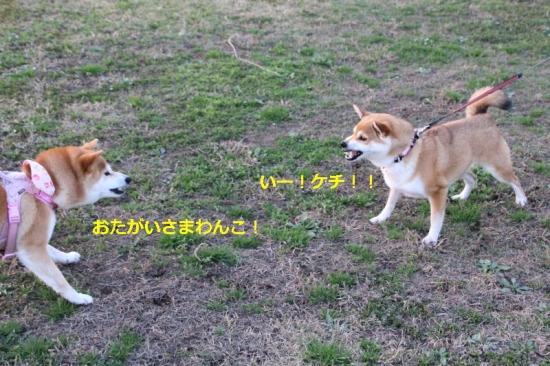 IMG_3565_AZUKI.jpg