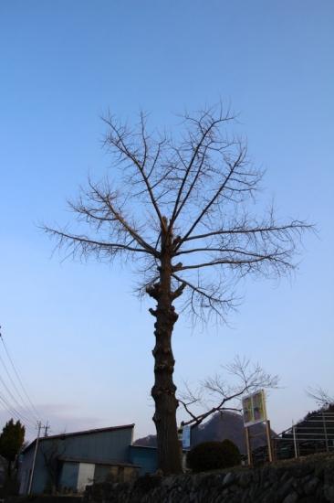 IMG_3748_AZUKI.jpg