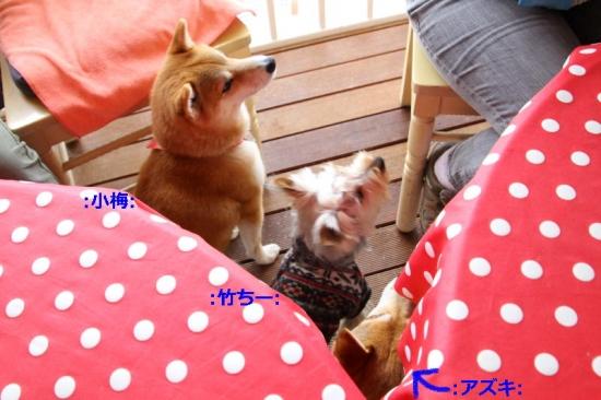 IMG_4033_AZUKI.jpg