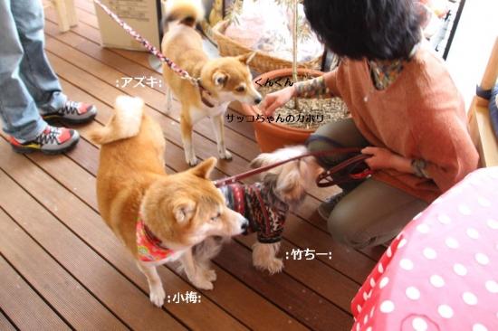 IMG_4059_AZUKI.jpg