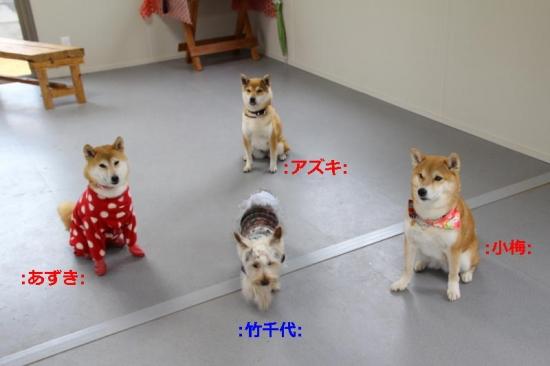 IMG_4182_AZUKI.jpg
