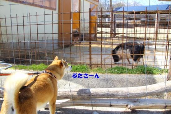 IMG_4370_AZUKI.jpg