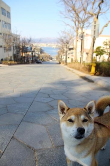 IMG_4885_AZUKI.jpg