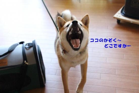 IMG_5397_AZUKI.jpg