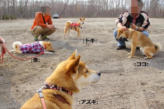 IMG_5770_AZUKI.jpg