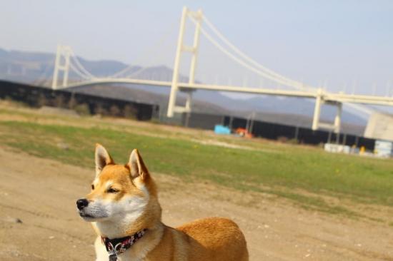 IMG_6828_AZUKI.jpg