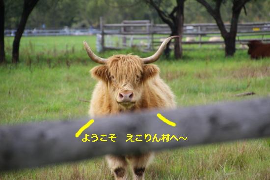 IMG_9741_AZUKI.jpg