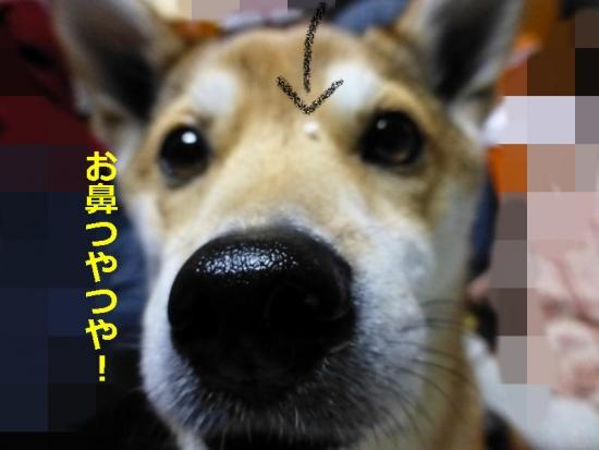P1160698_AZUKI.jpg