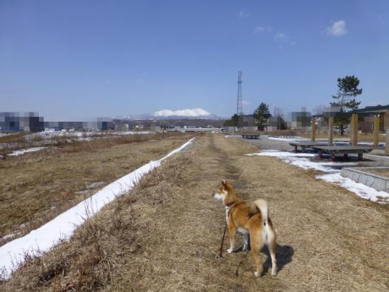 P1160792_AZUKI.jpg