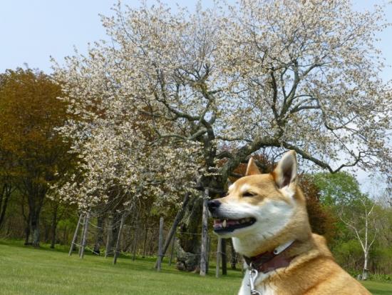 P1160939_AZUKI.jpg