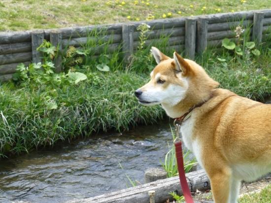 P1160951_AZUKI.jpg