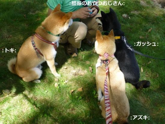 P1180382_AZUKI.jpg