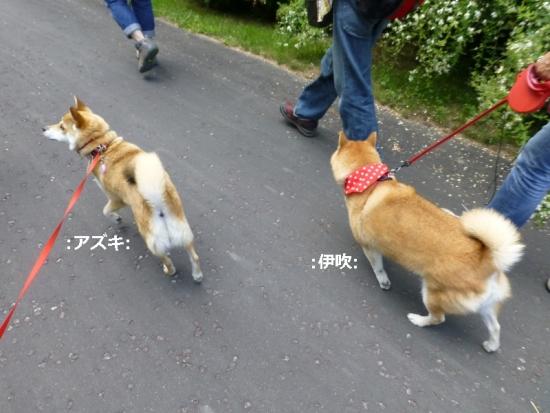 P1180455_AZUKI.jpg