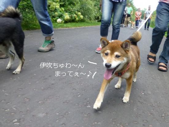 P1180457_AZUKI.jpg