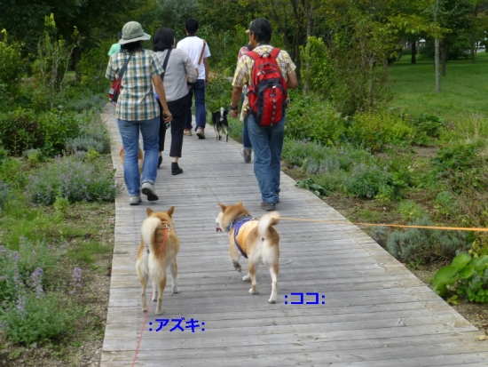 P1180481_AZUKI.jpg