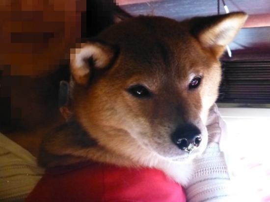 P1180810_AZUKI.jpg