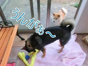 s-niwa140416-CIMG6689