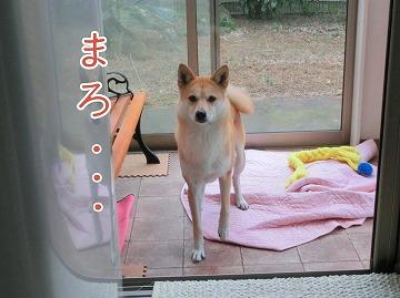s-matuwa140416-CIMG6807