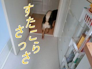 s-matuwa140416-CIMG6813