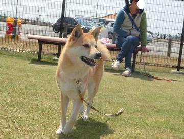 s-dogrun140425-CIMG8842