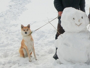 s-snow140509-1-CIMG7250