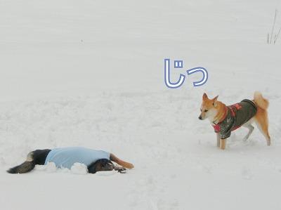 s-snow140509-CIMG7178
