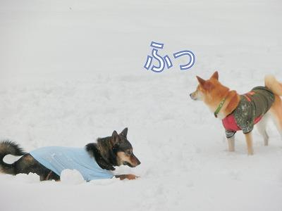 s-snow140509-CIMG7179