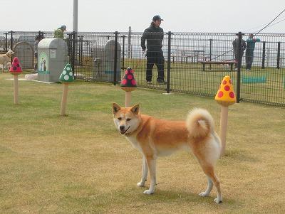 s-dogrunCIMG8896.jpg