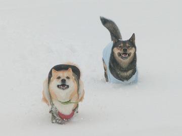 s-snowCIMG7135.jpg